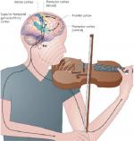 Как на мозг влияет классическая музыка на – Влияние классической музыки на человека